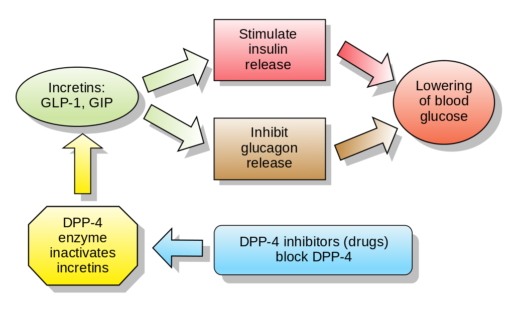 Insulin Resistance and You